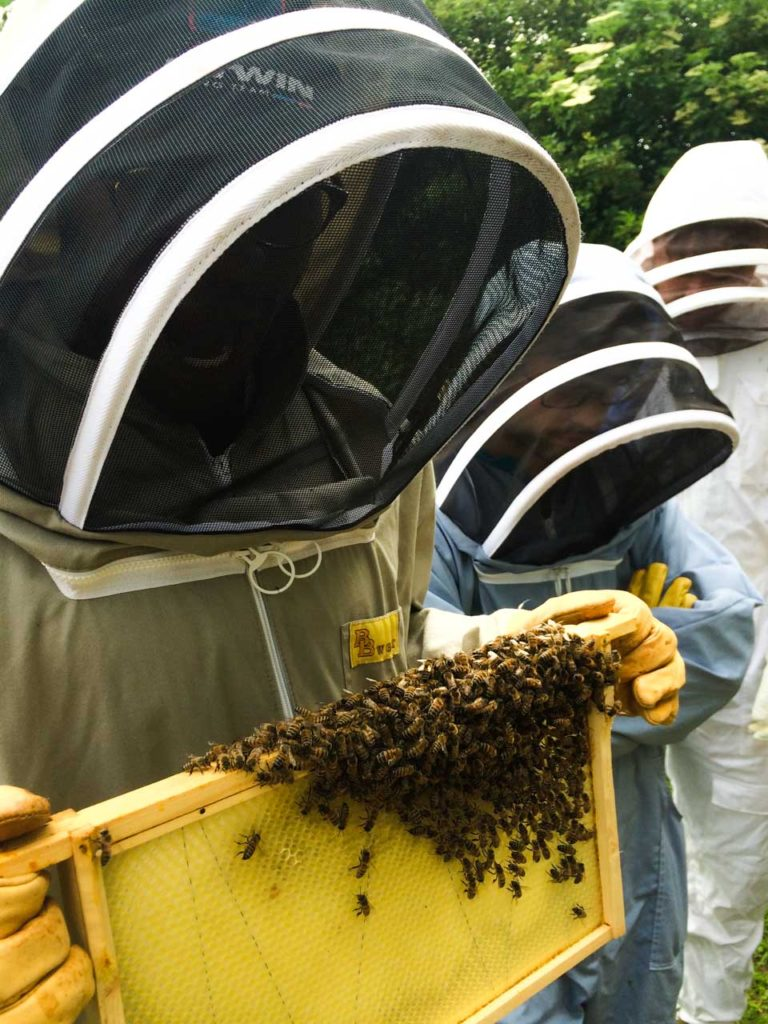 The HandleBards Beekeeping